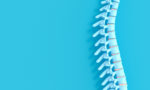 3d render image of a spine